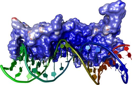 Studium Bioinformatik