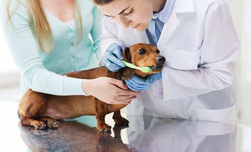 Studium Tiermedizin